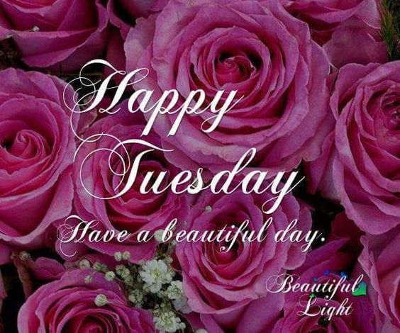 Beautiful Rose Tuesday tuesday tuesday quotes beautiful tuesday tuesday  pictures tuesday images tuesday im… | Tuesday pictures, Good morning  tuesday, Tuesday quotes
