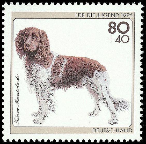 Stamp Germany 1995 Briefmarke Kleiner Münsterländer.jpg
