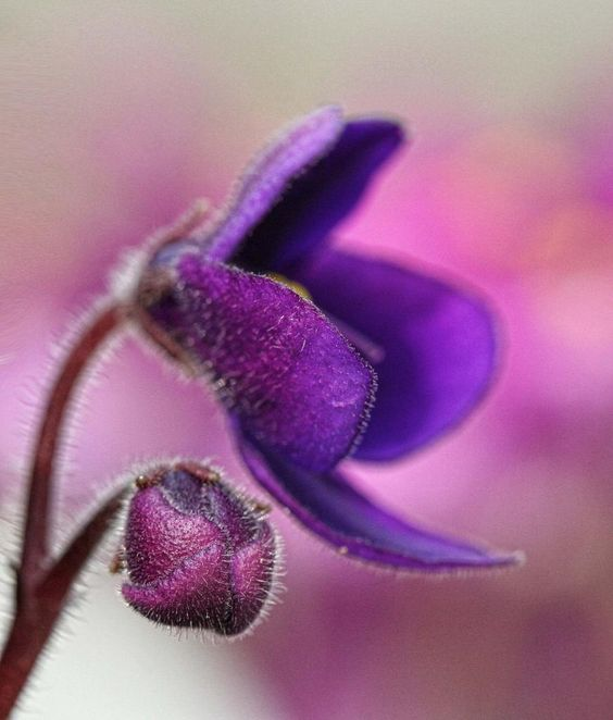 La #violette pour mes produits hydratants Framboise-Violette