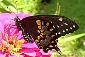 Steps to planting a butterfly garden.