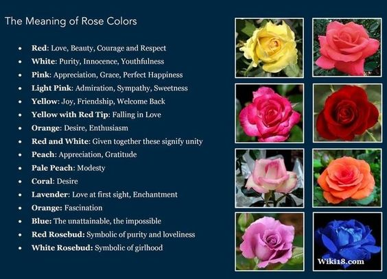 Image result for rose color meaning list
