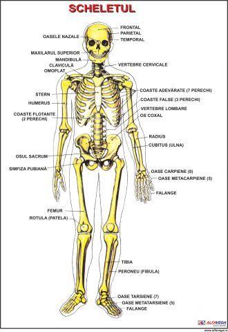 artrita articulației carpiene