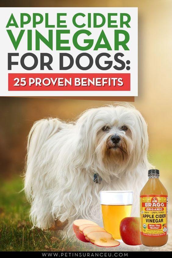 Pple Cider Vinegar Dog Treatments Apple Cider Vinegar Or Acv Is