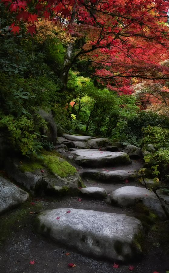 Seattle, Paths And Japanese Gardens On Pinterest