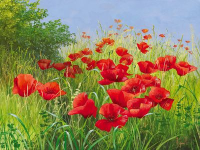 Flores rojas (arte decorativo) Fotografías en AllPosters.es