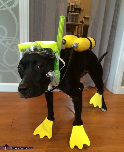 Stephanie: Ivory the pitbull/lab is wearing a DIY scuba costume. Which originated from her love of swimming in lakes, pools, puddles etc.