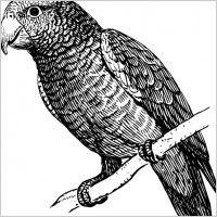 Parrot clip art