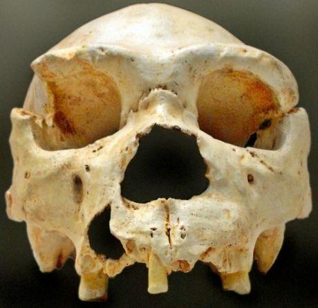 De l'ADN ancien jette le trouble sur les origines de l'Homme