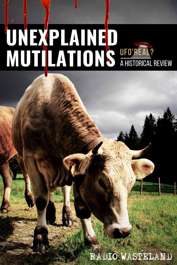 Unexplained Animal Mutilations With William Pullin We welcome back our most prolific guest, William Pullin to discuss animal mutilations and the connection between animal mutilations and the UFO phenomenon.