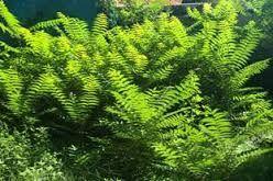 Resultado de imagen de flora alta garrotxa