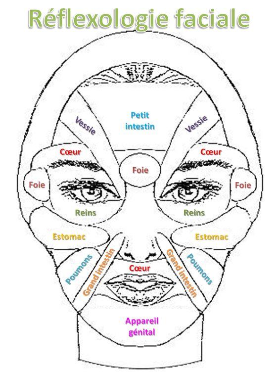 Réflexologie faciale simplifiée en français. A imprimer.: