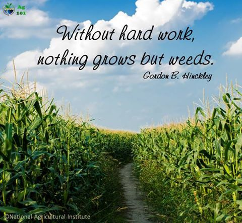Without Hard Work Nothing Grows But Weeds Ag 101 Inspirational Quotes Encouragement Hard Work Quotes Ag Quote