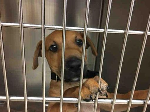 Austin Tx Labrador Retriever Meet Tupac A Dog For Adoption Dog Adoption Dogs Labrador Retriever