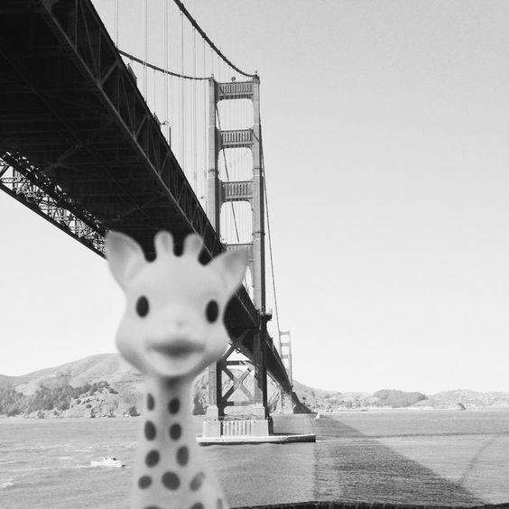 photo drole de sophie la girafe à San Fransisco - pont de San Fransisco