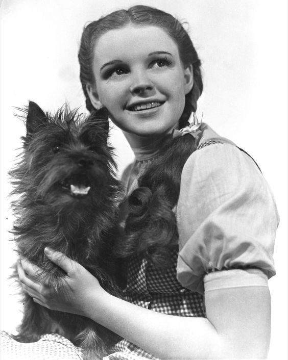 Dorothy gale judy garland and toto too people i for Dorothy gale