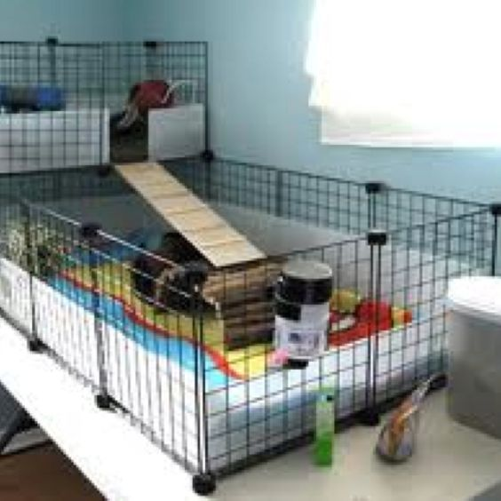 guinea pig playpen animals ideas for pets pinterest