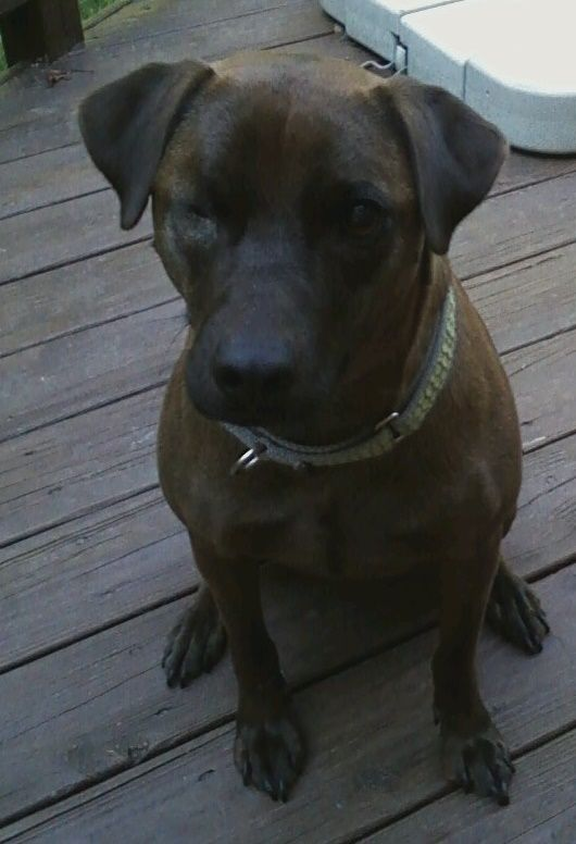 Adopt Coco Puff Aka Cokie On Petfinder Dog Adoption Pets Terrier Mix Dogs