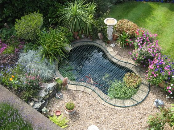 Ponds safety and goldfish pond on pinterest for Goldfish pond ideas