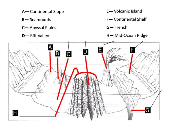 Heres a great site with a good diagram of the physical features – Ocean Floor Worksheet