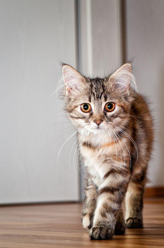 Love those ears! :o)