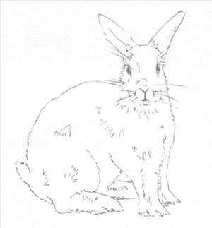 Hop To It And Learn To Draw A Bunny Rabbit With These Easy