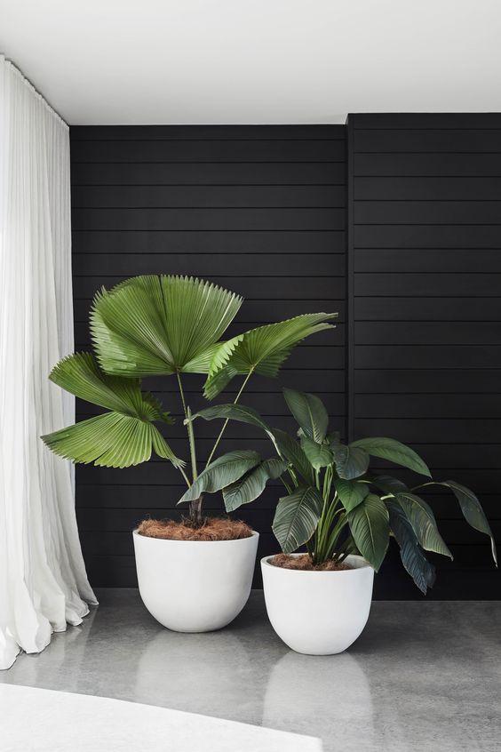 30 Indoor Decorative Plants To Bring Freshness Plant Decor Indoor Indoor Plants Plant Decor