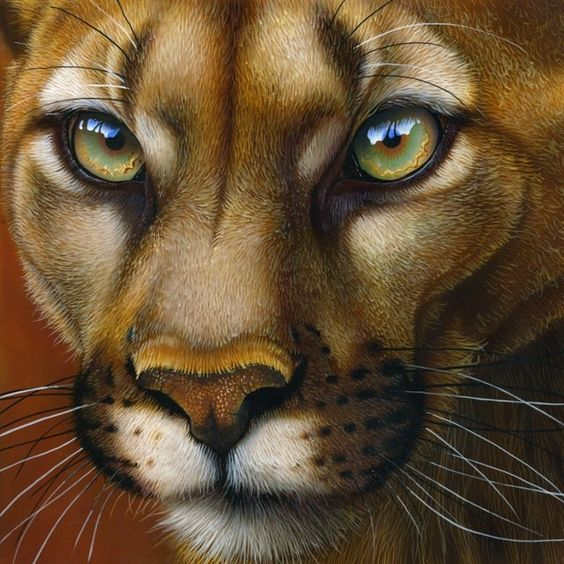 Mountain lion painting by Jurek Zamoyski