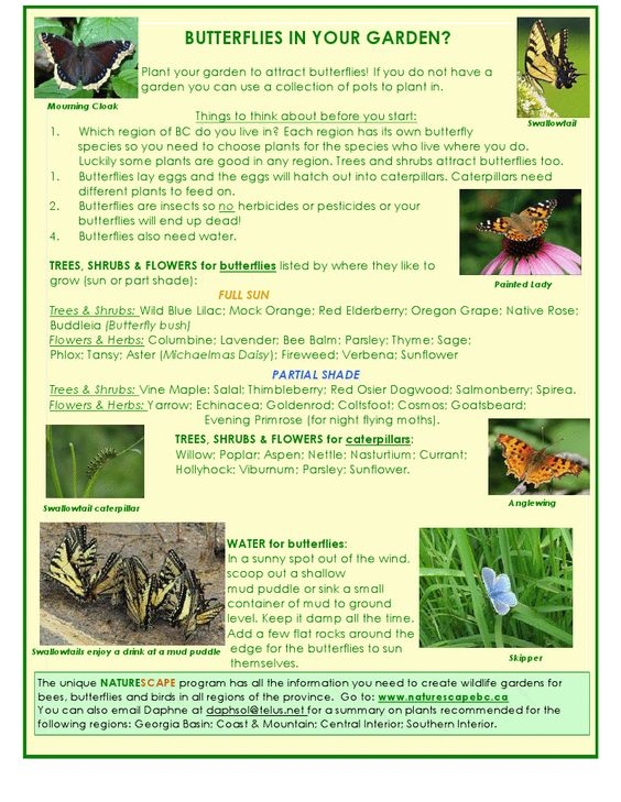 YNC Butterfly Garden - Club Activity Pages