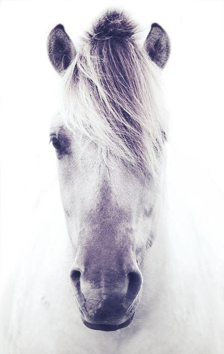 süßes, weißes Pferd