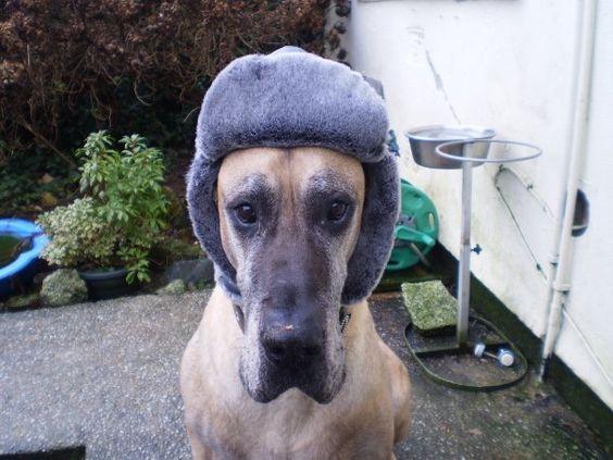 My Dane Benson wearing my Hat! He loved wearing it when chilly wind blew!
