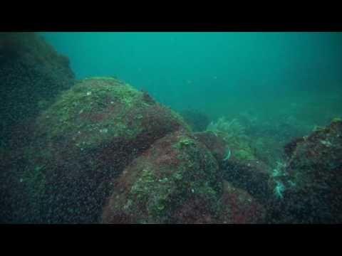 中性浮力で生まれたての魚を観察、初島のダイビング