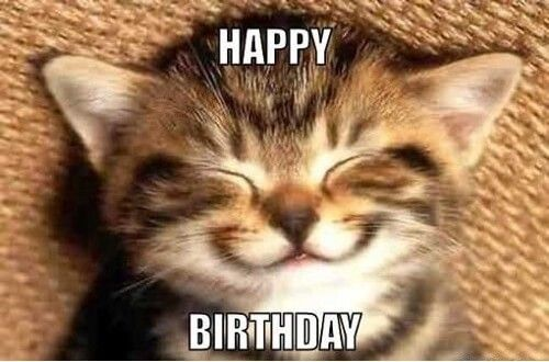 Happy Birthday Memes Download Happy Birthday Funny Cats Cat Birthday Memes Kittens Cutest