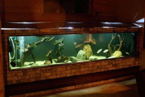 DIY Aquarium.