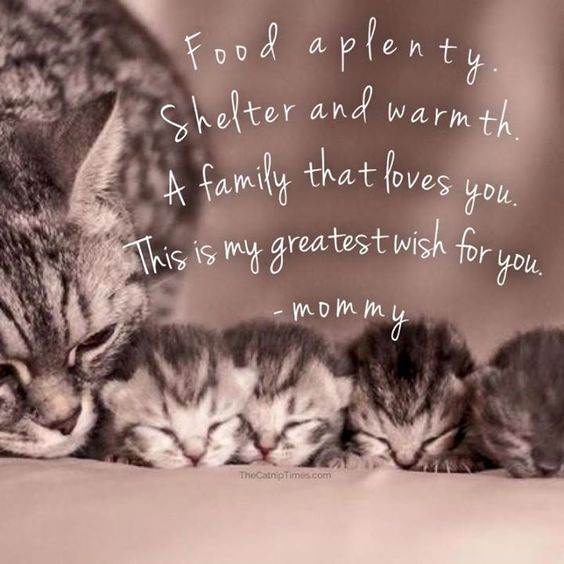 For my little fosters; Harper, Goodman,Dorsey and Patty, and their Mom, Mia.