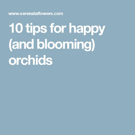10 tips for happy (and blooming) orchids