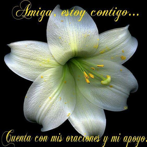 Alientoporlaperdida Jpg16 Condolencias Frases Condolencias Frases De Aliento