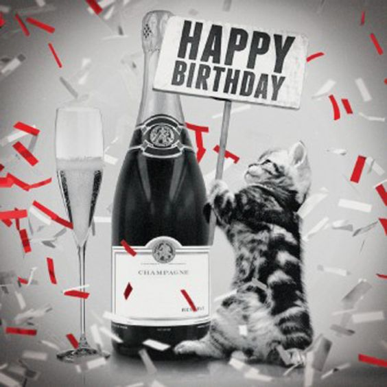 cat champagne - Google Search: