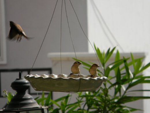 NEW Large Novelty Wooden Gazebo Hanging Garden Bird House Feeder Feeding Station