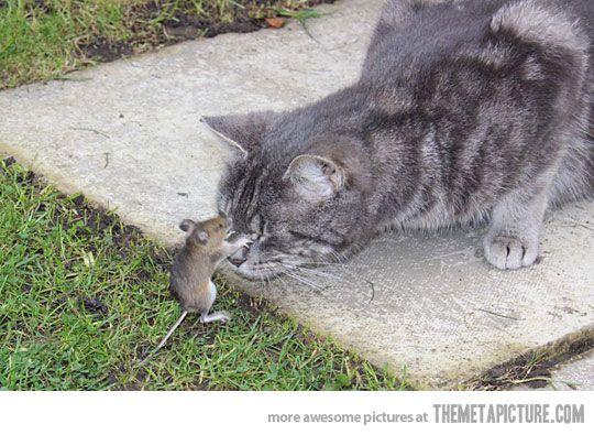 Brave little mouse. Sweet little cat