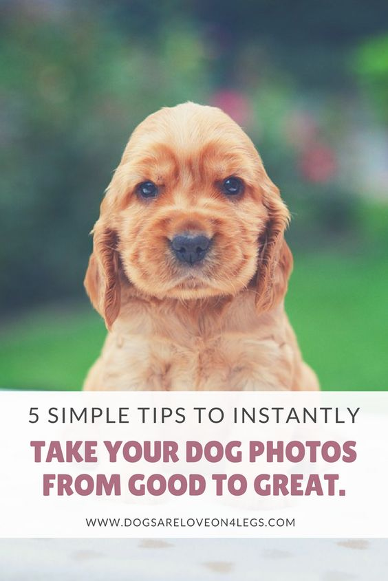 5 Simple Tips To Instantly Take Your Dog Photos From Good To Great