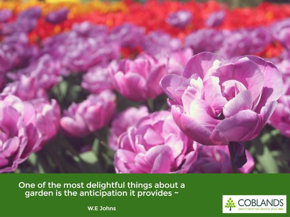 """""""One of the most delightful things about a garden is the anticipation it provides"""" - W.E Johns"""