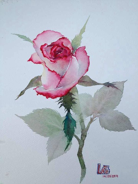 28 roses watercolor painting by la for How to paint a rose in watercolour