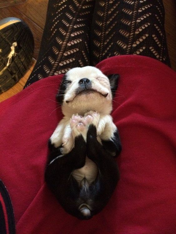 And this girl who simply cannot be real. SHE'S JUST TOO CUTE.   27 Puppies Who Are Too Cute To Be Real
