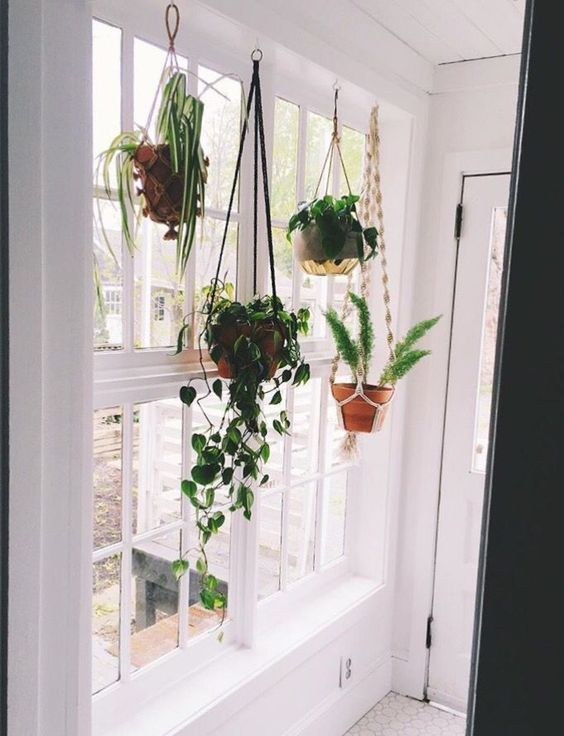 15 Beautiful Hanging Plants Ideas Molitsy Blog Hanging Plants Indoor Window Plants Hanging Plants