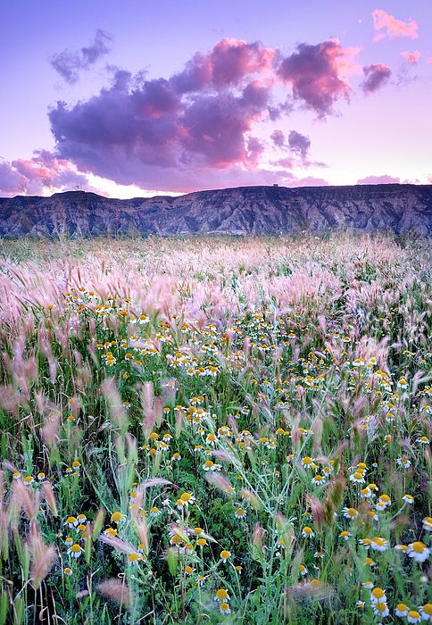 Spring Flower Daisy Landscapes Bad Lands Desert Spain Horizontal Colorful Outdoors Nature Landscape Plant Photography Nature Photography Landscaping Trees