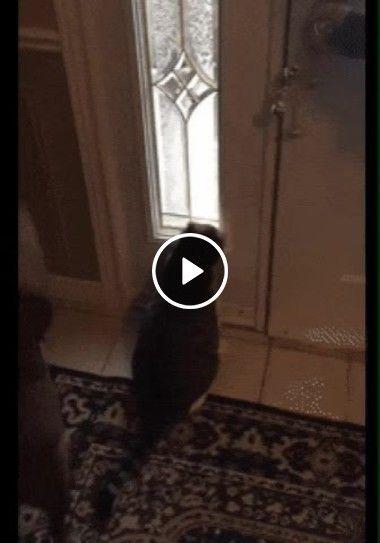 Abre essa porta logo, quero ir lá fora. Mudei de ideia, está muito frio!