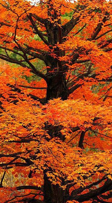 orange leaves....