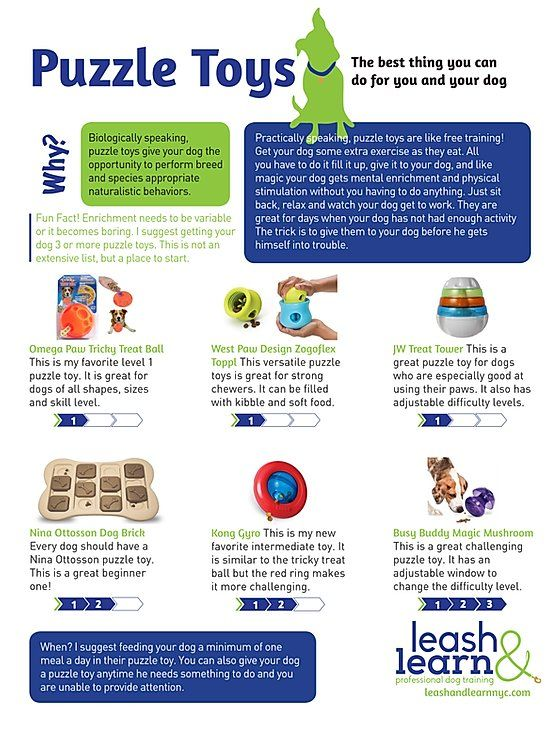 Leash And Learn Free Training Tips Nyc Dog Training In 2020