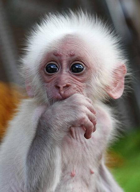 Funny Looking Animals | These funny baby animals (40 pics ...
