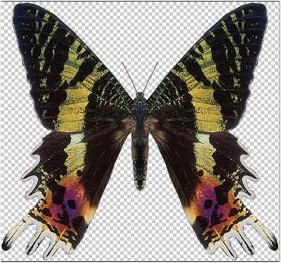Recursos Chele Guada: 50 Mariposas en Png (149 Mb)